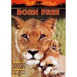 Born Free (1970) (DVD)